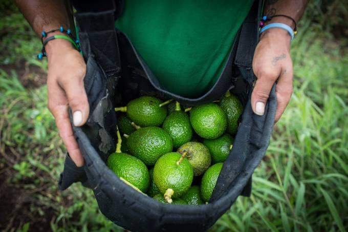 abacate vira sinônimo de caixa sustentável de hedge funds